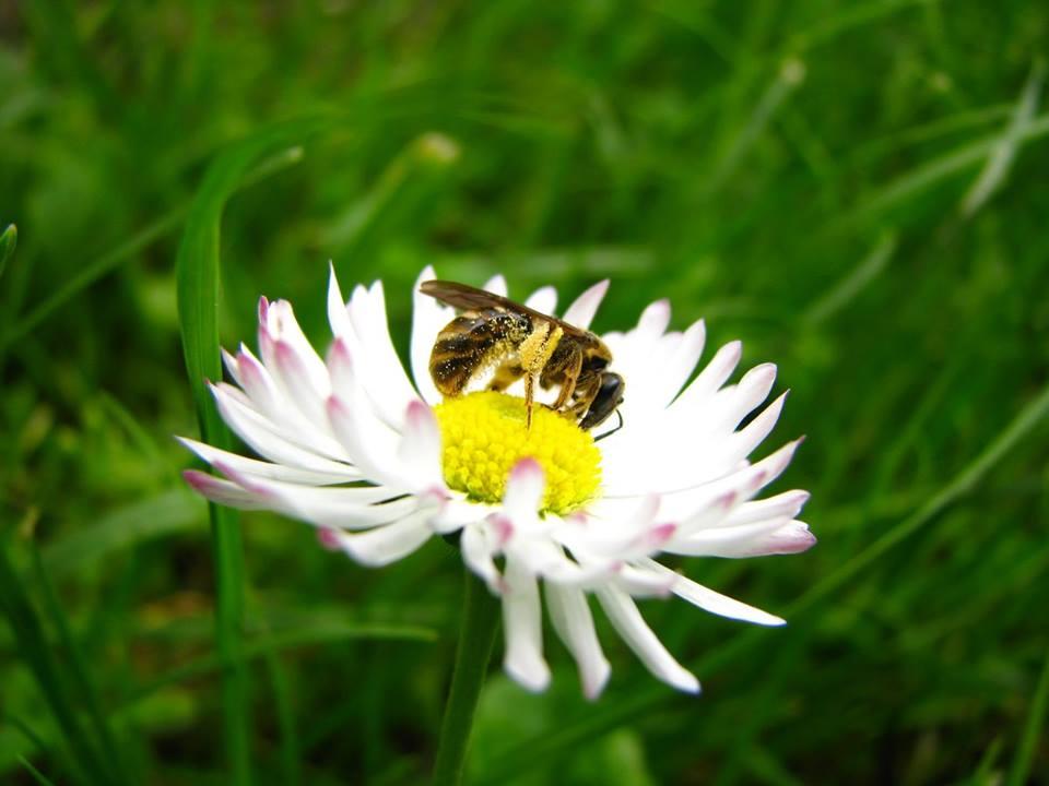 Včelia farma MEDAREŇ Predávame med, včelí peľ a iné