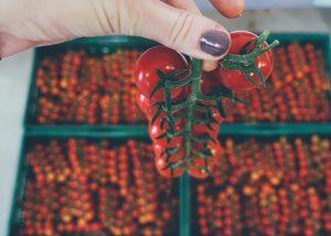 Farma Bruty na farme v súčasnosti pestujeme paradajky a čučoriedky