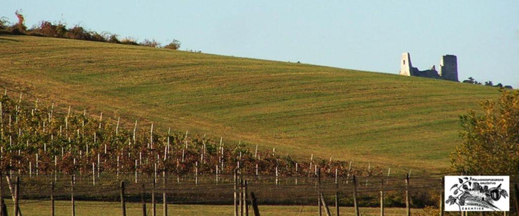 Výsledok vyhľadávania obrázkov pre dopyt čachtické chotáre víno