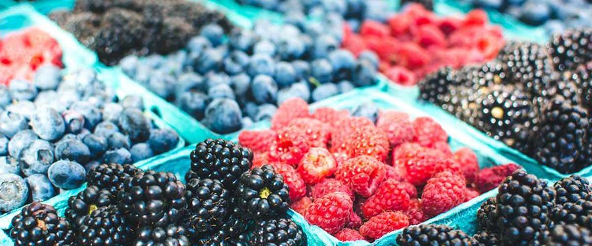 Samozber Horná Streda Pestuje drobné ovocie jahody, čučoriedky, maliny, černice