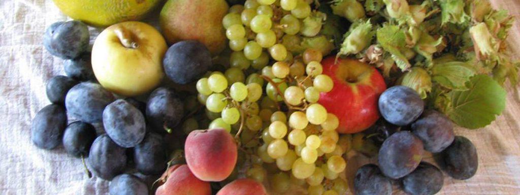 Ovocný ekologický Sad Lívia pestuje prevažne jabĺčka, hrušky, hrozno