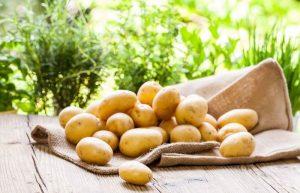 Zeleninárska družstvo pestovateľov, zemiaky, cibuľa a ovocie